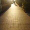 夕陽の中で...。