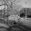 Photos: 前に行った公園…。