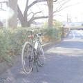 Photos: 緑道にて…、ハイキー