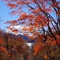 Photos: 湖のヒカリ