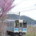 Photos: 桜と電車