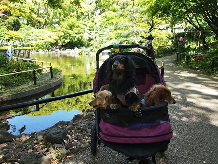 横浜公園の日本庭園『彼我庭園(ひがていえん)』