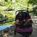 写真: 横浜公園の日本庭園『彼我庭園(ひがていえん)』