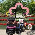 写真: 緑化フェア『横浜公園』.