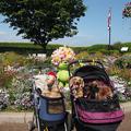 写真: 緑化フェア『港の見える丘公園』