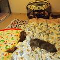 写真: 床暖房と羽毛布団で留守番