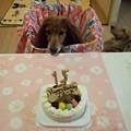 写真: 15歳誕生日