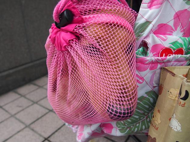 写真: メッシュ越しのミラちゃん