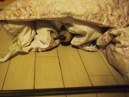 布団に潜るミラちゃん