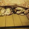 写真: 布団に潜るミラちゃん