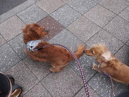 強風の散歩
