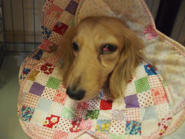 写真: 二日目かかりつけ病院診察後のミラ