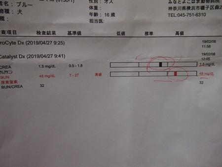 血液検査 貧血とクレアチニン