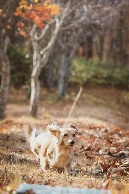 飛行犬ミラ