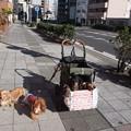 Photos: 令和元年さんぽ納め