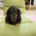 Photos: お兄ちゃんの座椅子
