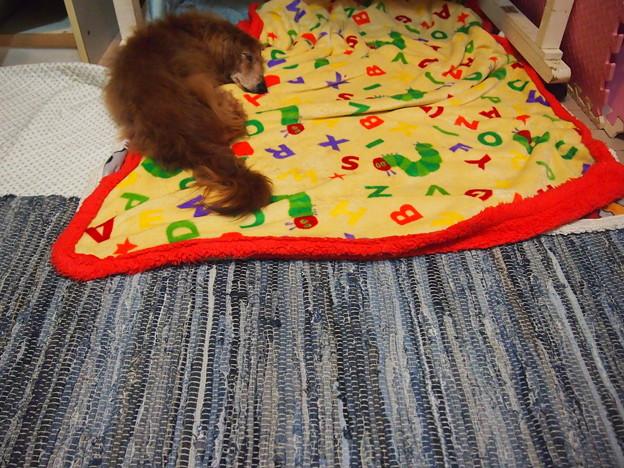 デニムのカーペット