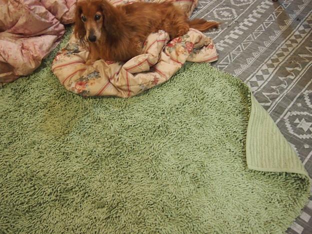 あたらしいカーペット