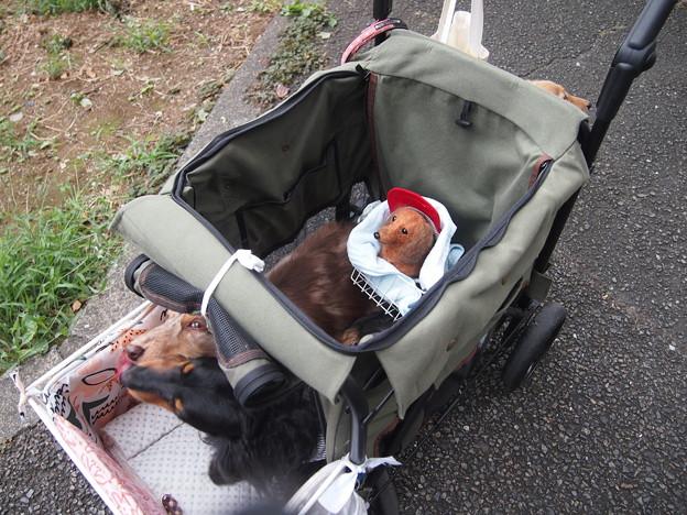 Photos: アローとモニカの後ろに座るブルーちゃん