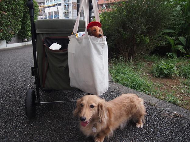 Photos: ブルーちゃん 散歩に行こうか