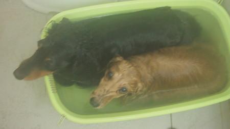 バスタブでシャンプーして上がり湯に浸かってます