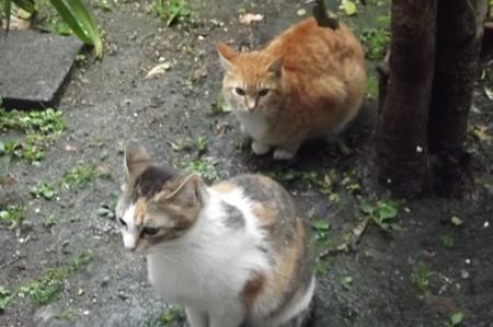 ミケママ&ミニチグ0430
