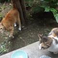 写真: ミケママ、ミニチグ0619