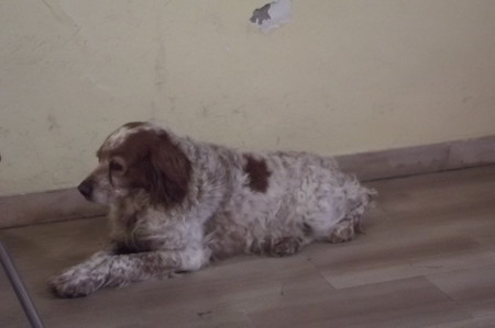 Fossato di Vico 駅の犬0126