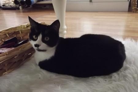 サンマリノのネコ0128