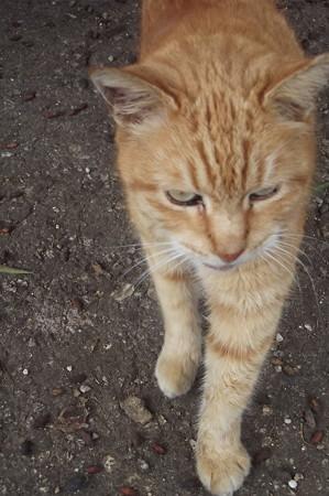 マルタのネコ0207