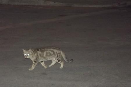 マルタのネコ0208