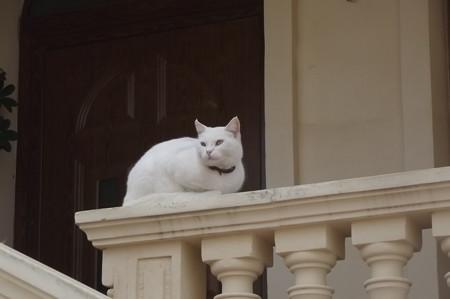 ゴゾのネコ0210