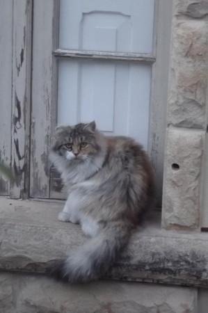 ゴゾのネコ0211