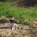 写真: マルタのネコ0214