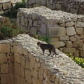 写真: ゴゾのネコ0214
