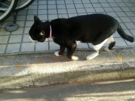 通りがかりのネコ0310