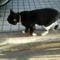 写真: 通りがかりのネコ0310