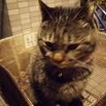 写真: 近所のネコ0314