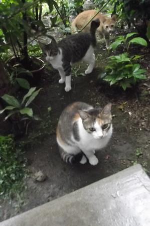 ミケママ&子ネコ0923