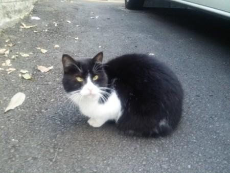 近所の白黒ネコ1025