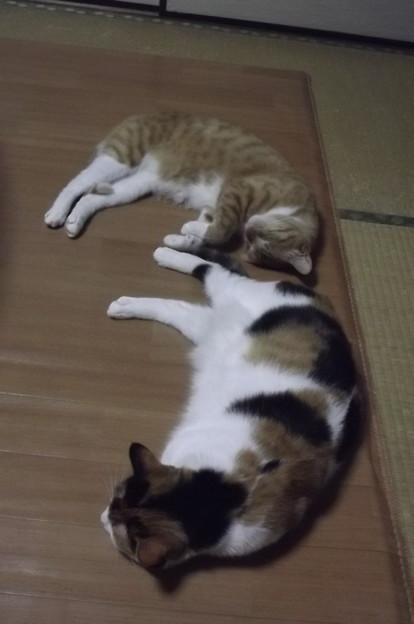チグ&ミーシャ1210