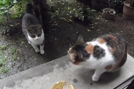 ミケママ&ミニジョー1228