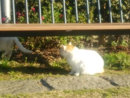 公園のネコ0326