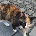 Photos: キルケニーのネコ0422