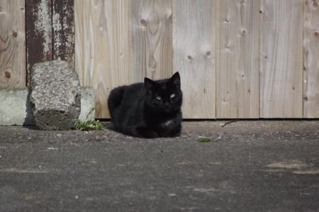 ディングルの黒猫0425