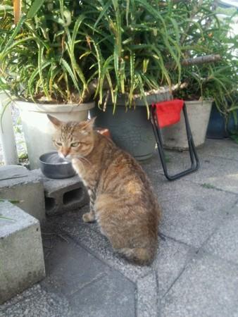 ある外猫0603