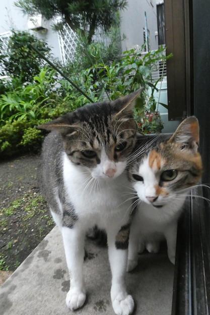 ミニジョー&ミケママ0812