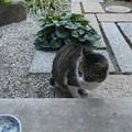Photos: ミニジョー0119