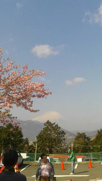 富士山と桜@神奈川県松田町、西平畑公園2