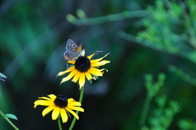 夏の終わりの花